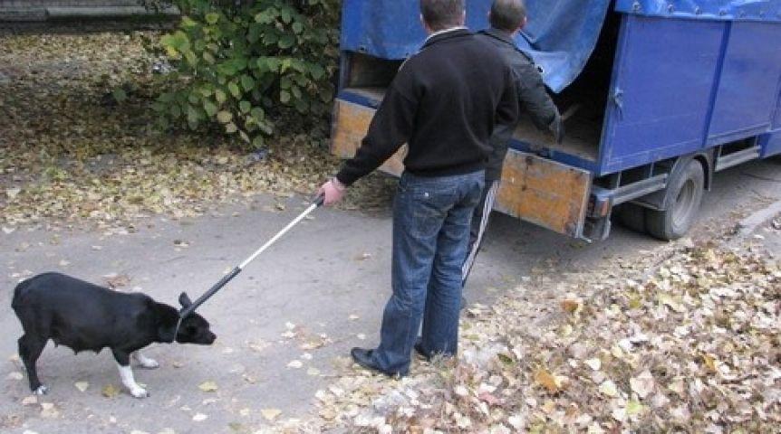 как ловить собаку