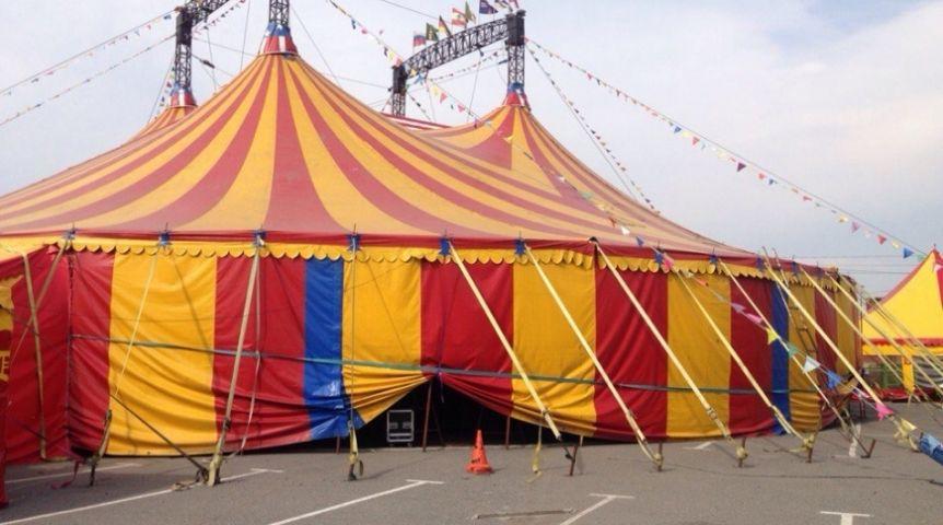 скачать игру через торрент цирк шапито - фото 8