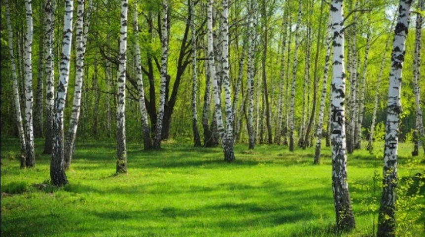работа в лесу в омске и омской области выбор низкие