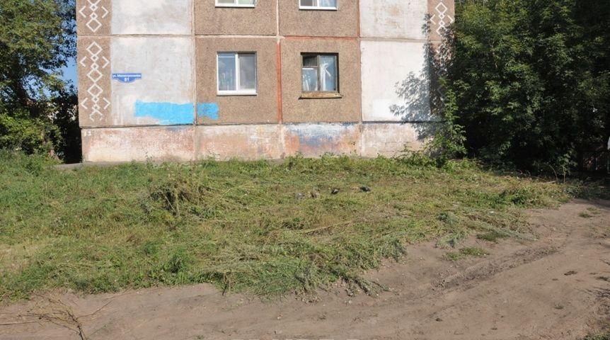 Милиция пожалобе жильцов омского дома уничтожила 220 кустов конопли водворе