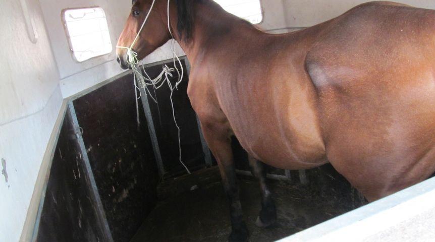 ВОмской области задержали подозреваемых всерии краж лошадей