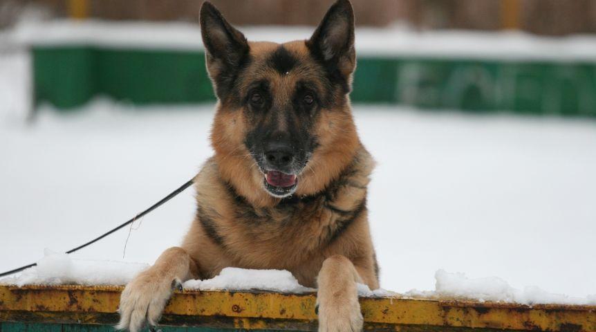 ВХарькове продолжат устанавливать площадки для выгула собак