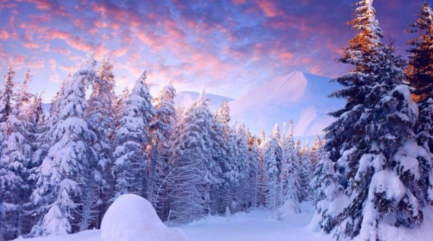 Вокруг Омска появится 30-километровый лес изхвойных деревьев