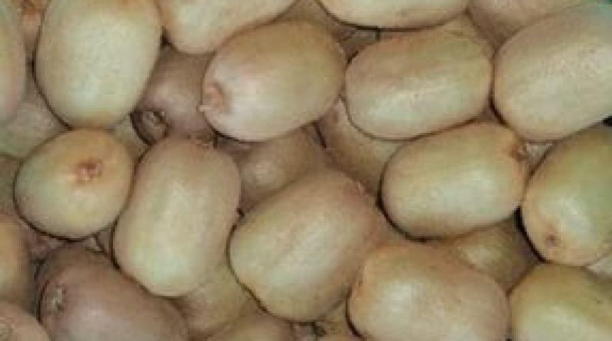 ВОмской области бульдозером раздавили 3 тонны итальянских киви