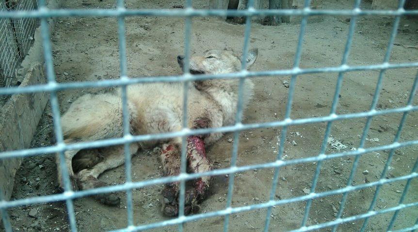 ВБольшереченском зоопарке отвергли обвинения втравмировании животных