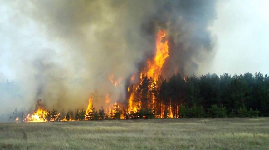 Леса вОмской области стали гореть втри раза чаще