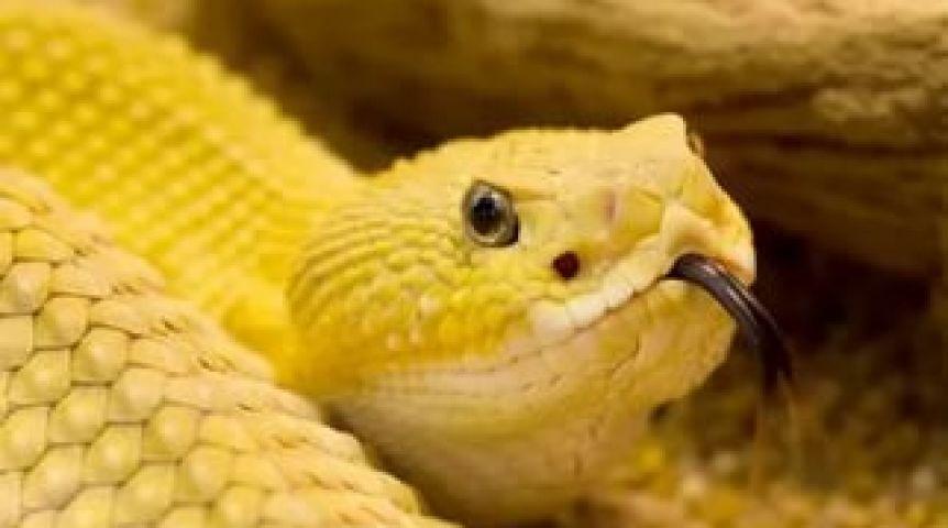 Сприходом тепла омич вывел на берег змею