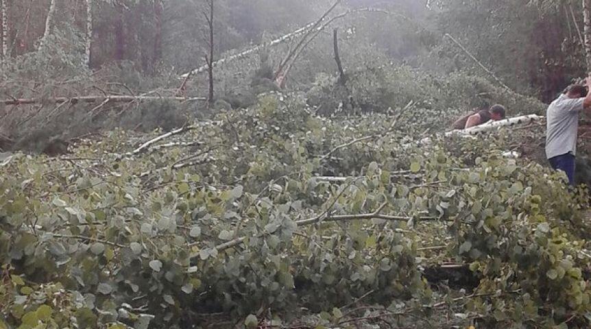 Винтернете появилась видеозапись урагана, который повалил деревья на дорогу вОмске