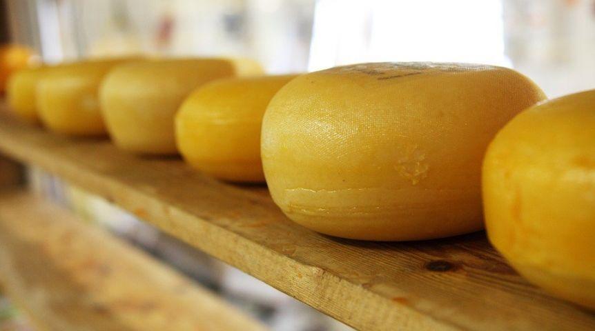 Астролог Наталья Талисман согласилась опроизводстве итальянских сыров вОмской области