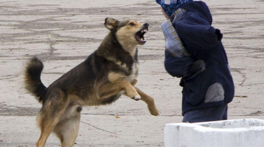 ВОмске собачка прокусила 9-летнему парню плечо